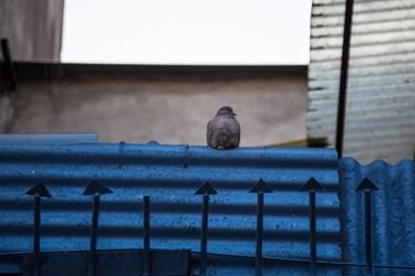 کوچه رنگی پایتخت