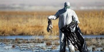 تمام تالابهای کشور بهزودی درگیر آنفلوآنزای پرندگان میشوند/ ورود به تالابها برای همگان ممنوع شود