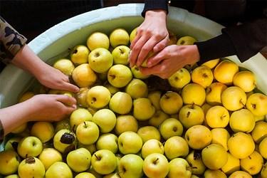 شست و شوی میوه ها جهت آبگیری