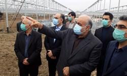 احداث بزرگترین گلخانه غرب کشور در «اسلامآباد غرب»/ استاندار:  تا مرداد ۱۴۰۰ زیرکشت میرود