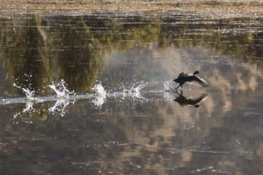 تالاب زریوار بهشت پرندگان