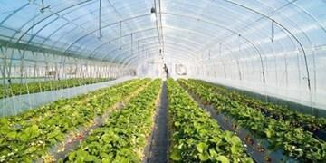 جمعآوری و کاشت ۱۴ گونه دارویی جدید در استان اردبیل