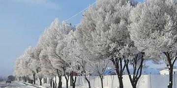 بارش برف و باران از امروز/ حاکمیت هوای بسیار سرد در اردبیل طی روز جمعه