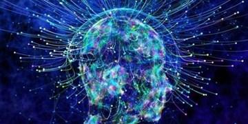 اختتامیه مسابقات کشوری علوم اعصاب شناختی برگزار شد / حمایت از برترین ایدهها