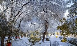 تهران در انتظار آخر هفتهای بارشی/ سرما، یخبندان و احتمالا سقوط بهمن در راه است
