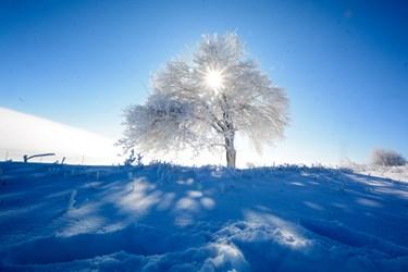 رخت سپید برف پاییز بر تن بجنورد