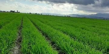 پایان «شاهنامه» اراضی کشاورزی «توس» برای چه کسانی خوش است؟/ این مهلت دادستانی هم به سر رسید!
