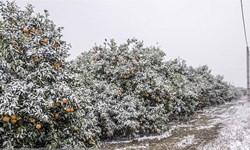 بارش برف و تگرگ در برخی مناطق کشور/آسمان تهران بعدازظهر فردا بارانی است
