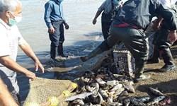 کاهش ۲۳ درصدی صید ماهی در گیلان
