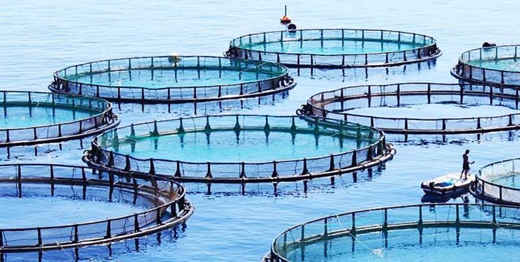 40 مجوز پرورش ماهی در کردستان صادر میشود