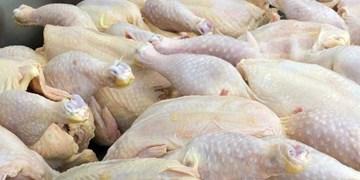 خروج مرغ از استان بوشهر ممنوع شد/ مرغ از فردا در بازار عرضه میشود