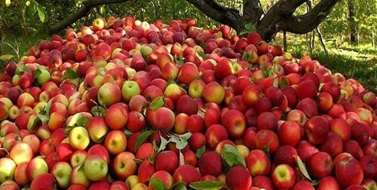 صفر تا صد مشکلات صادرات و انباشت 500 هزار تن سیب در سردخانهها