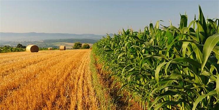 بخش کشاورزی چگونه میتواند در انتخابات ریاست جمهوری آینده تعیینکننده باشد