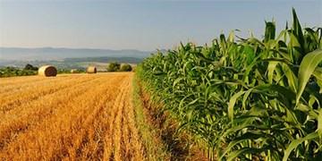 برگزاری آئین بهرهبرداری از طرحهای ملی وزارت جهاد کشاورزی با حضور روحانی