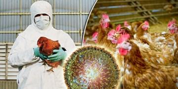 هیج گزارشی مبنی بر وجود آنفولانزای پرندگان در  آذربایجان شرقی اعلام نشده است