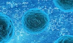 امید به درمان بیماریهای ژنتیکی/ سلولهای بنیادی محققان را در مسیر تازه قرار داد