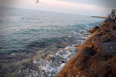 پرواز شالوها در غروب خلیجفارس