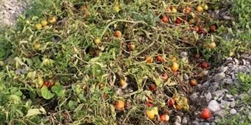 باد شدید و سرما در جنوب شرق و هشدار به کشاورزان 3 استان/آلودگی هوا ادامه دارد