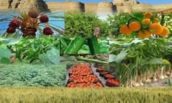 کشت محصولات کشاورزی نوع دیگری از کمک جهادی