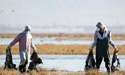 درگیری ۱۴ نقطه کشور با بیماری آنفلوانزای پرندگان/ بیماری کنترل شده است