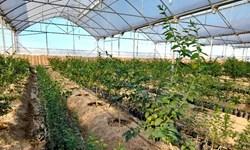 افتتاح 7 طرح کشاورزی در چادگان با اعتبار 64 میلیارد ریال