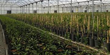 احیای شهرک گلخانهای سامیان اردبیل با ظرفیت اشتغالزایی ۱۲۰ نفری