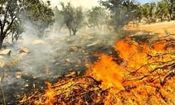 گزارش ویدیویی| بلای آتش در جان ۴۰ هکتار جنگل گیلان