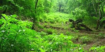 ۱۲۰ هکتار جنگل کاری در منطقه گلپرآباد ملایر انجام شد
