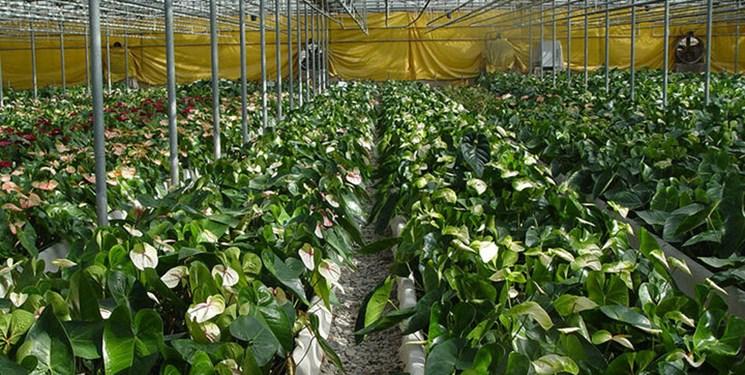 افتتاح مدرنترین گلخانه کشور در کرمان؛ ایجاد اشتغال پایدار برای 455 نفر