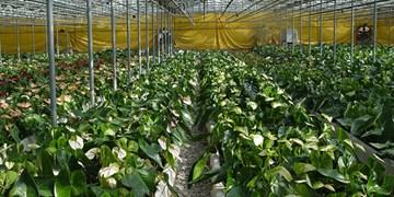 افتتاح مدرنترین گلخانه کشور توسط بنیاد مستضعفان در ارزوئیه کرمان؛ ایجاد اشتغال پایدار برای 455 نفر