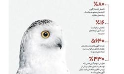 سیمای زشت خرید و فروش حیوانات در یک نگاه
