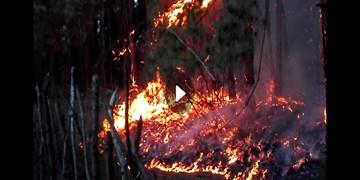 گزارش خبرنگار فارس از دل آتشهای جنگل گیلان