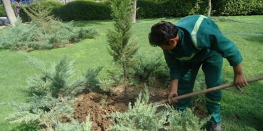 فارس من|کاشت درختان زیبا و مقاوم در برابر بیآبی، رویکرد توسعه فضای سبز صدرا