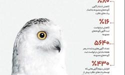 دیوار آگهیهای ممنوعه حیات وحش را چطور حذف میکند؟