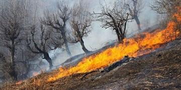 آتش در جنگلهای مریوان دوباره شعلهور شد