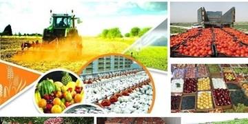 فاصله تولیدات کشاورزی با مراکز فرآوری محصولات باید کاهش یابد