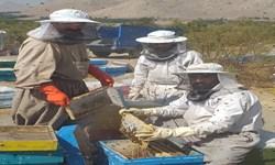 تلخ و شیرین زنبورداری در قطب تولید عسل/ محصولی که نیازمند برندسازی است