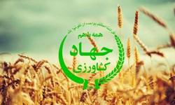 تشریح عملکرد جهاد کشاورزی کهگیلویه/کشت محصولات استراتژیک افزایش یافت