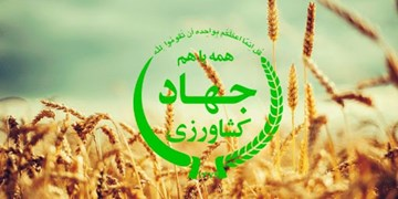 اهمیت امنیت غذایی بهویژه در زمان شیوع کرونا/ برای حفظ آمار صادرات محصول کشاورزی اصفهان مشکل داریم