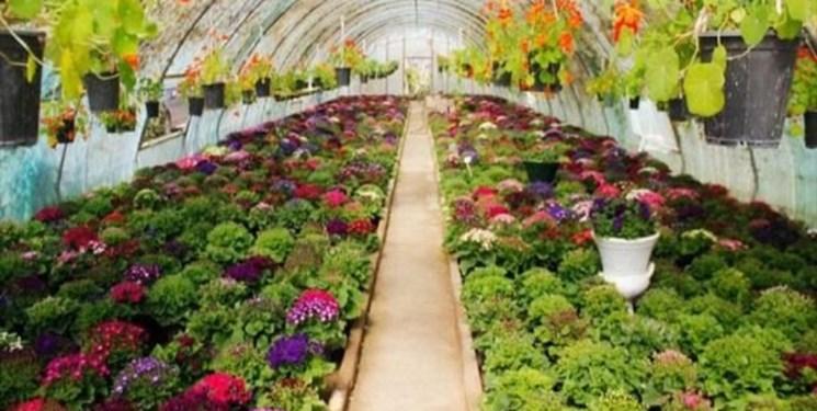 ایجاد اشتغال برای ده نفر در هر هکتار گلخانه در ایلام/ گلخانه، فرصتی برای بهبود کمی و کیفی محصولات