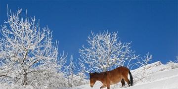 بارش باران و برف  و کاهش محسوس دما در راه آذربایجان