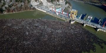 فیلم | تصاویری از زبالههای شناور در رودخانه صربستان
