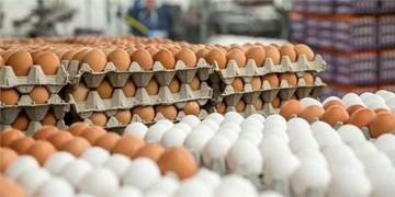 لزوم جلوگیری از قاچاق تخممرغ از بناب/ انتقاد از  افزایش نرخ بذر هویج به هر کیلو 16 میلیون تومان