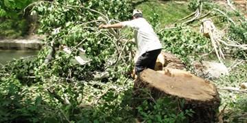 افرادی سوداگرانه تیشه بر ریشه درختان سمنان میزنند