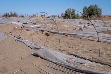 خسارت طوفان شن به کشاورزان جازموریان