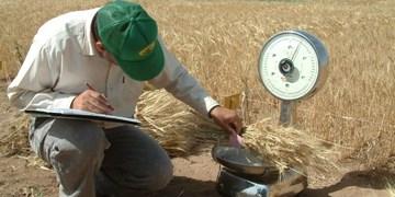 طرح جهش تولید در ۱۷۵ هزار هکتار از دیمزارهای کرمانشاه در حال اجراست