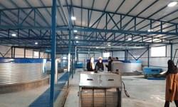 توسعه شیلات در نوق رفسنجان/از بزرگترین تولیدکننده آرتمیا در خاورمیانه تا پرورش ماهی خاویاری