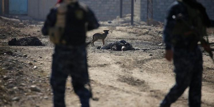 ۳ تروریست داعشی از جمله یک انتحاری در مرز عراق با سوریه کشته شدند