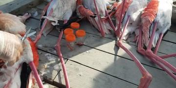 جمعآوری لاشههای پرندگان در برف و بوران