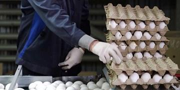 چرا قیمت تخم مرغ دوباره افزایش یافت/ بازارگرمی تولید کنندگان یا بی خبری مسئولان؟
